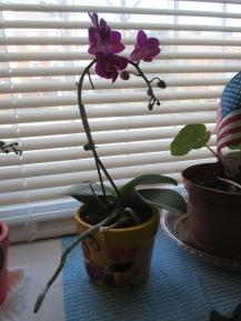 33 Johnson St, orchids 034
