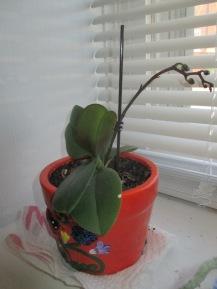 33 Johnson St, orchids 035